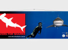 banner Divers for Sharks